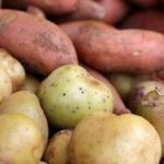 Palivo pro sportovce: žlutá a sladká brambora, co je lepší?